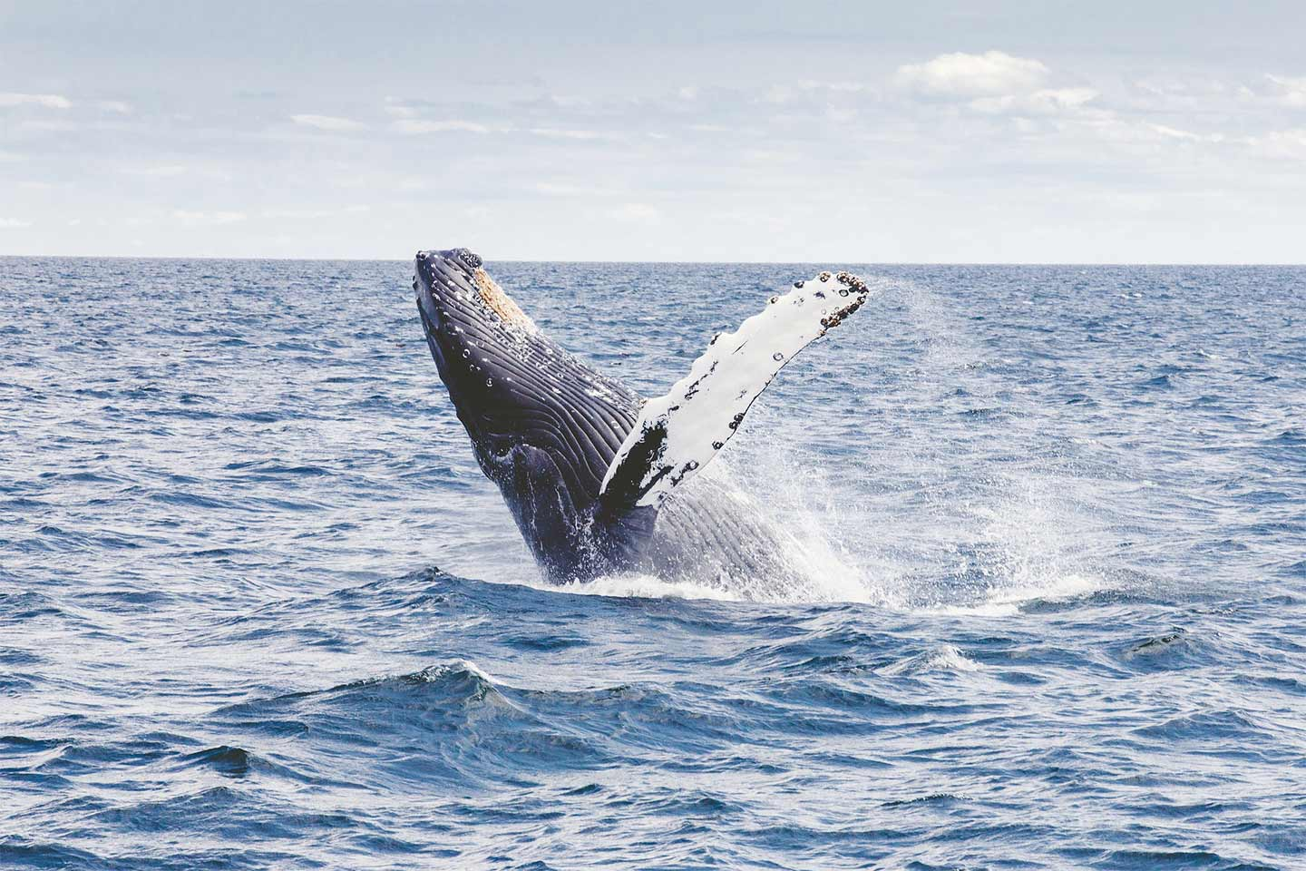 The Ultimate Guide to Whale Watching in Sydney